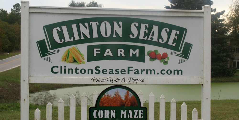 Our Clinton Sease Farm Corn Maze Experience