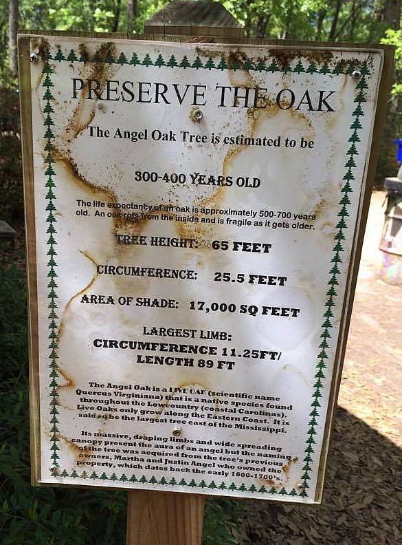 How old is The Angel Oak Tree