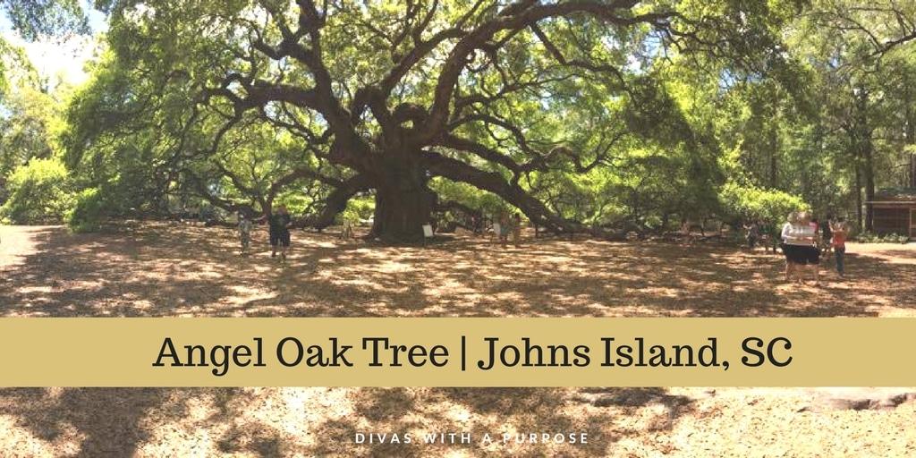 Angel Oak Tree Johns Island SC
