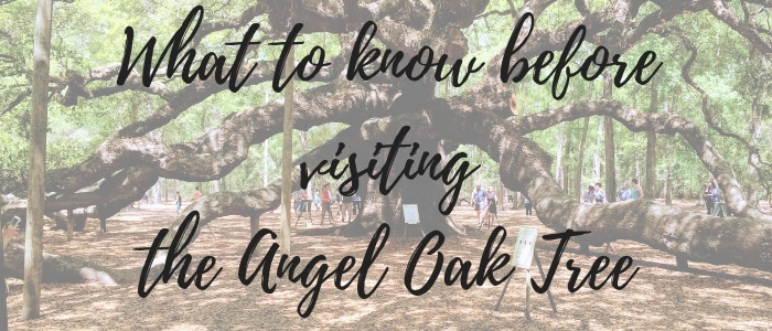 What to know before visiting the Angel Oak Tree
